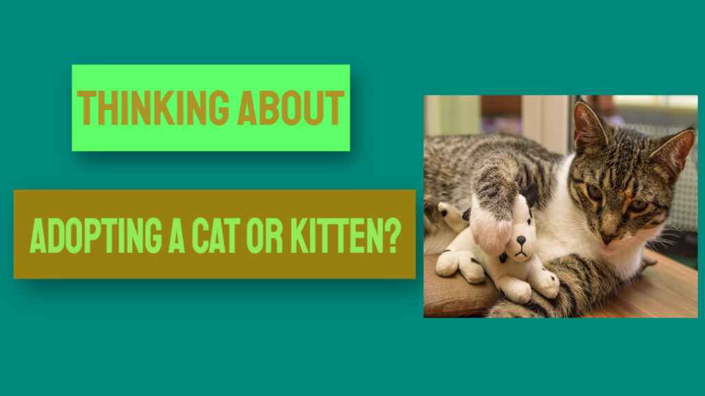 adopting a cat or kitten