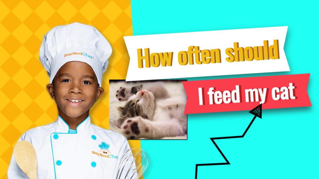 how often should I feed my cat