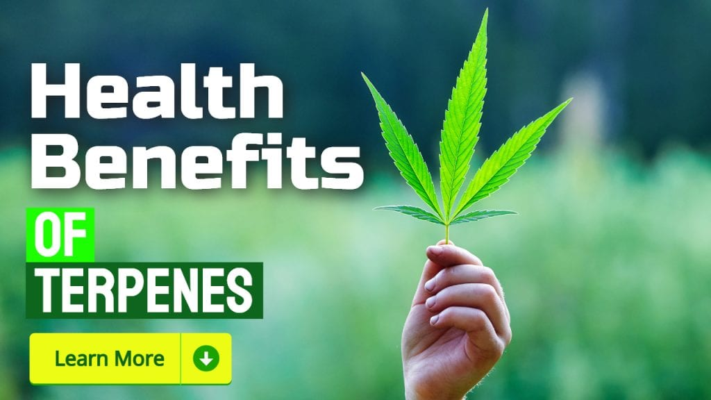 terpenes benefits