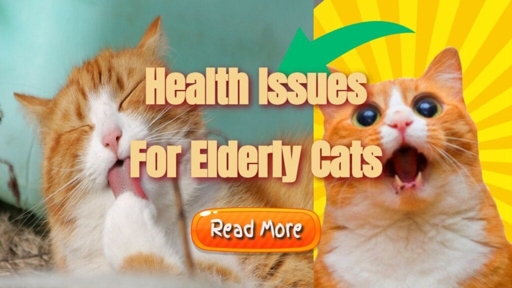 health issues for elderly cats banner